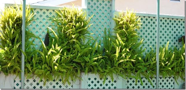 Пример вертикального озеленения