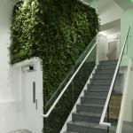 Вертикальное озеленение - натуральные живые растения