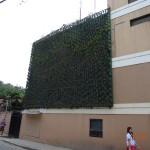 Незамысловатое вертикальное озеленение о. Боракай Филиппины