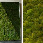 bright-green-moss-wall